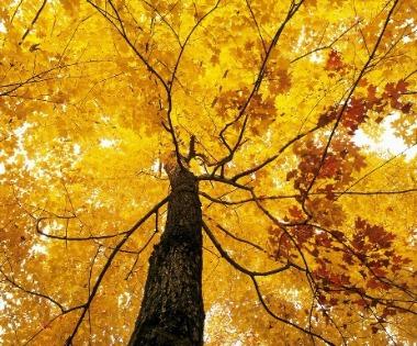Amenajarea gradinii-Plantarea arborilor ornamentali în grădină(12/25)