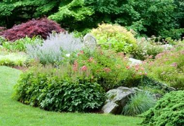 Amenajarea gradinii-Folosirea florilor perene în grădină(14/25)