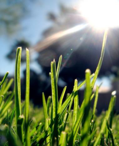 Amenajarea gradinii-Montarea gazonului în grădină(17/25)