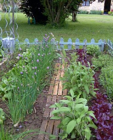 Amenajarea gradinii-Amenajarea unei grădini de plante aromatice(18/25)
