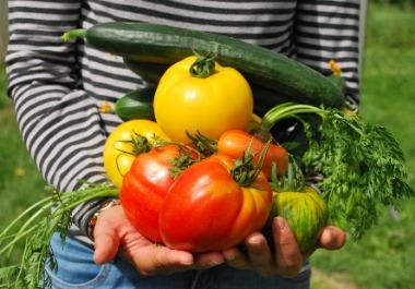 Amenajarea gradinii-Amenajarea unei grădini de legume(19/25)