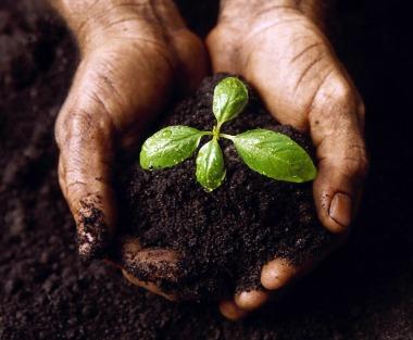 Amenajarea gradinii-Fertilizarea gradinii(24/25)